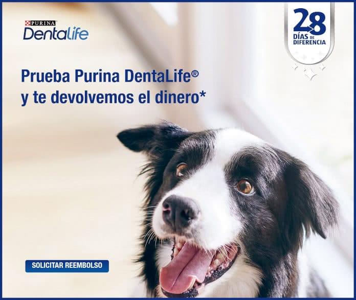 Purina Dentalife 28 días de descuento