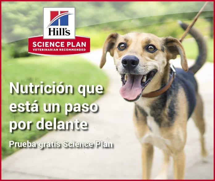 Prueba gratuita de Hills Science Plan
